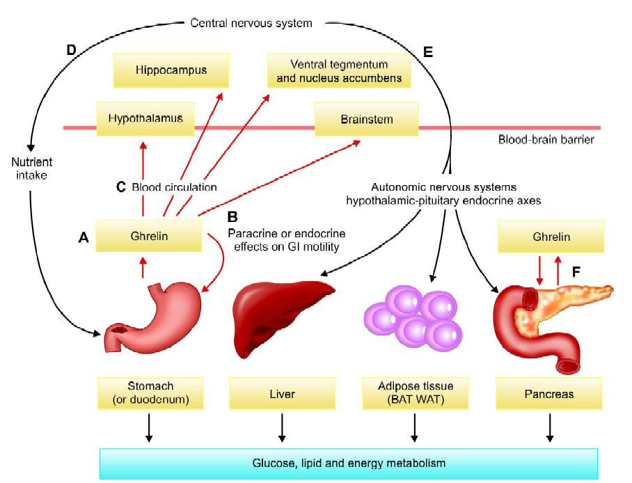 Role of ghrelin in glucose and lipid metabolism